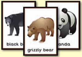 Bear Themed Resources