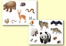 Forest and Wood Animal Resources