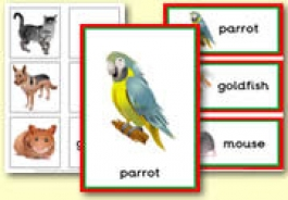 Pet Themed Teaching Resources