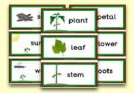 Plant Theme Resources
