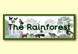 'The Rainforest' Themed Resources