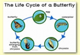 Life Cycle Themed Resources