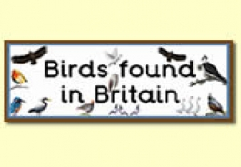 British Bird Themed Resources