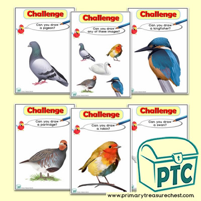 British Birds  Themed ICT Challenge Cards