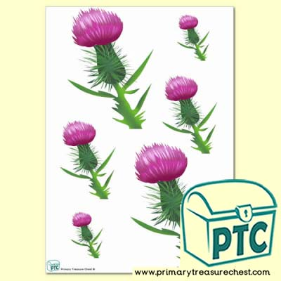 Thistle Sorting Activity