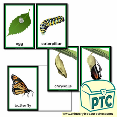 'The Life Cycle of a Butterfly' Sorting Cards