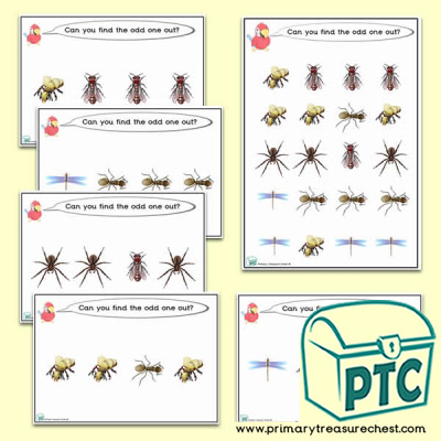 Odd-One-Out Insects  Challenge Activity Stage 1