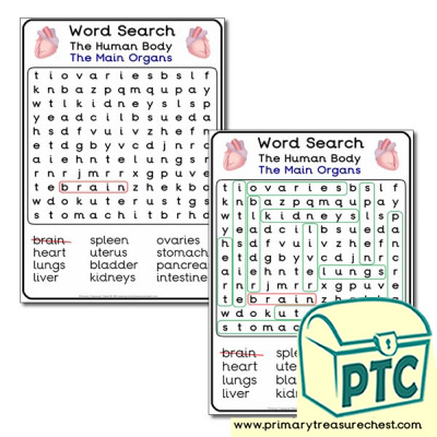 The Main Organs - Word Search