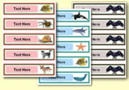 Pupil Drawer Labels (Small)