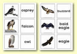 Bird Themed Resources