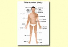 Our Bodies Themed Resources