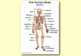 The Human Body Themed Resources