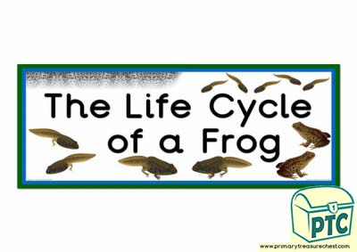 'The Life Cycle of a Frog' Display Heading/ Classroom Banner