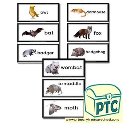 Nocturnal Animal Themed Flashcards