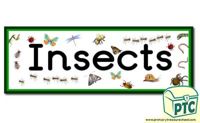 'Insects' Display Heading /  Classroom Banner
