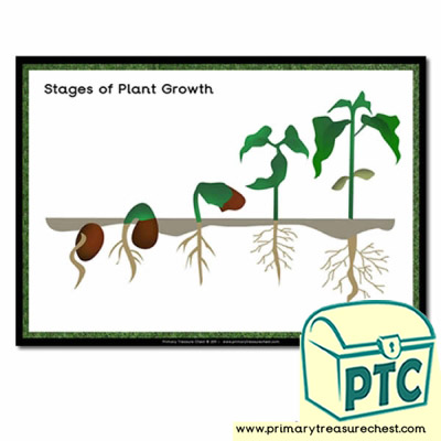 Stages of Plant Growth Poster