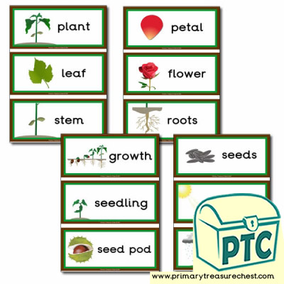 Plant Themed Flashcards