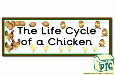 'The Life Cycle of a Chicken' Display Heading/ Classroom Banner