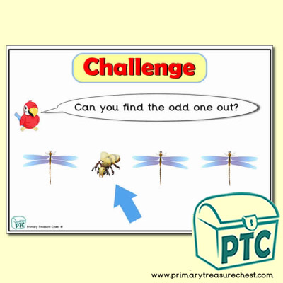 Insects themed Odd-One-Out Challenge A4 Poster