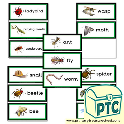 Minibeasts Themed Flashcards