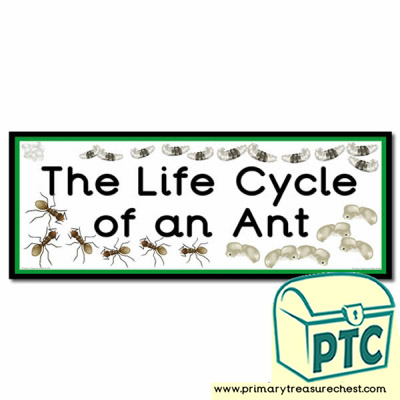 'The Life Cycle of an Ant' Display Heading/ Classroom Banner