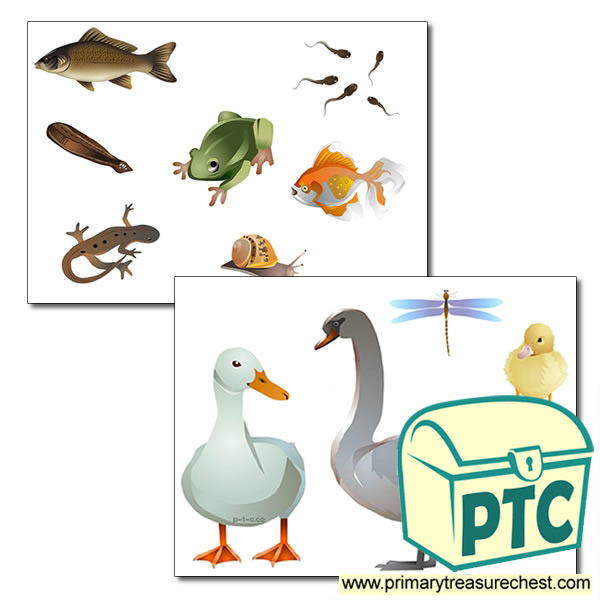 Pond life Storyboard / Cut & Stick Images