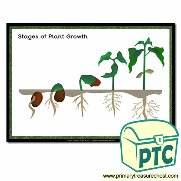 Stages Of Plant Growth Worksheet - Фото база
