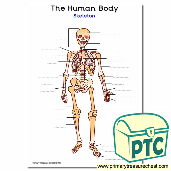 Human Skeleton A4 Worksheet Primary Treasure Chest